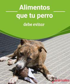 Alimentos que tu perro debe evitar - Mis animales En ocasiones dañamos a nuestro perro sin saberlo, te dejamos un listado de los alimentos que tu perro debe evitar, aunque pienses que son buenos para él.