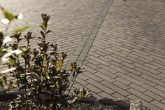 Linea pavers.  Great for modern-looking #driveways and walks.  #techo-bloc