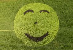 Foto aérea mostra rosto sorridente desenhado em um campo de #arroz na #China. Foto: Reuters.