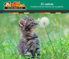 Los alimentos naturales son una tendencia para alimentar a los gatitos. Conoce más de esta tendencia en: http://www.universomascotas.co/bienestar/gatos/como-alimentar-correctamente-mi-gatito