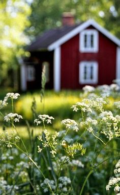 From A Mother's Time Capsule  HAZEL'S CHILD  In time he would drive the two of them away from the place, away to a cottage where red roses and Queen Anne's lace twined along a fence. Their child would run barefoot through the warm soil of a kitchen garden, extend a starfish hand crushing mint leaves, and tossing smiles and laughter toward them both.