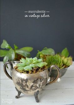 5 thrifted silver cups succulents, container gardening, repurposing upcycling, succulents