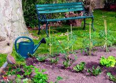 Zahrádkářské rady I. Planting Seeds, Outdoor Furniture, Outdoor Decor, Gardening, Green, Flowers, Plants, Ideas, Art