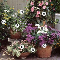 Vary Plant Shapes  A. Mandevilla 'Alice du Pont' -- 1   B. Geranium (Pelargonium 'Fantasia White') -- 1  C. Heliotrope (Heliotropium 'Marine') -- 3  D. Thyme (Thymus 'Argenteus') -- 5  E. Dianthus 'Devon Cottage Miss Pinky' -- 3  F. Nolana 'Blue Eyes' -- 2  G. Lantana 'Lucky Yellow' -- 1  H. Geranium (Pelargonium 'Graffiti Double White') -- 1