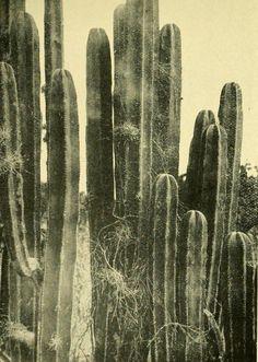 #cactus #plant #desert http://mylittlemisspriss.com