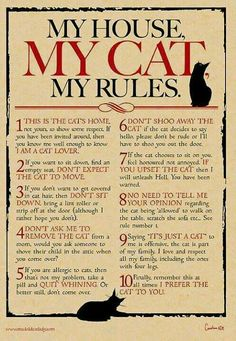 My House, My Cat, My Rules Digital print for cat lovers - crazy cat lady - Chat Cat Tiger, Doja Cat, Kitty Cats, Cats Bus, I Love Cats, Cute Cats, Funny Cats, Old Cats, Cats And Kittens
