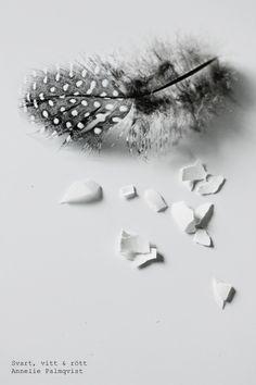fjäder, feather, easter, påsk, påskdagen, 2014, äggskal, fotografi