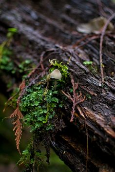 Mushroom by innocent.thunder.photography.