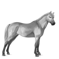 horse muscle shading - Google Search