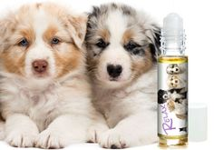 AUSTRALIAN SHEPHERD ANXIETY AND STRESS RELIEF DOG AROMATHERAPY Your Australian Shepherd may have been bred to herd stubborn cows, stealthy sheep, wily chickens, annoyed geese (hey, they can be mean!),