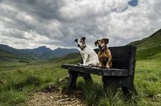 My dogs Photo by David Scholfield -- National Geographic Your Shot