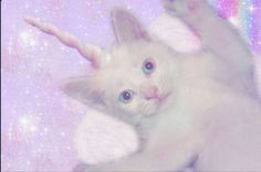 Caticorn. #kitten #unicorn #cute