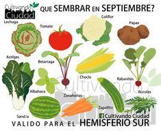Super CAMPO le indica qué variedades conviene sembrar en la huerta en el mes de septiembre, de modo que cuando llegue el verano pueda cosechar verdura fresca y variada, en el fondo de su casa.