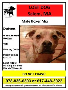 LOST MALE DOG - 9/18/14 -SALEM, MA Dalton a 6 year old, tan boxer mix was lost on 9/18/14 around 6pm while walling in Salem woods. Please be on the lookout and call his owners if see at 978-836-6303 or 617 448 3022.