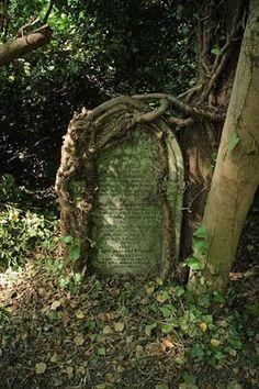 Gravestone and Tree