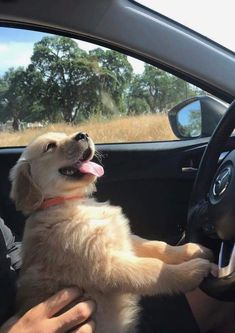 This amazing puppy golden retriever will warm your heart. Dogs are fascinating creatures. Baby Animals Pictures, Cute Animal Pictures, Animals And Pets, Cute Little Animals, Cute Funny Animals, Funny Dogs, Chien Halloween, Cute Dogs And Puppies, Doggies