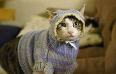 sweaters for cats - Bing Images