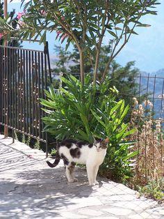 """""""I'm a traveling cat."""" --  cat in crete"""