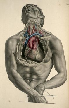 scienceyoucanlove:  Exposure of the heart and its great vessels from 'Surgical Anatomy' by Joseph Maclise, 1856. through IA