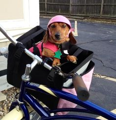 Zoomer Gear Pup Helmets <3 and a padded basket! @Brittany Horton Horton Moody geisler @Denise H. H. H. kingman