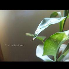 #nature#love#lighteffect