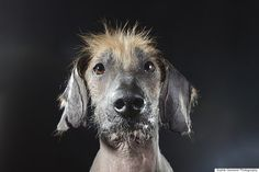 Schuester, a Xoloitzcuintli and hound mix. Hairless Dogs Photo Series Brings Attention To Ethical Breeding Practices