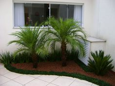 Easy Beautiful Small Palm Trees Gardening Ideas For Backyard Florida Landscaping, Tropical Landscaping, Outdoor Landscaping, Front Yard Landscaping, Outdoor Gardens, Palm Trees Landscaping, Front Garden Landscape, Landscape Design, Garden Design