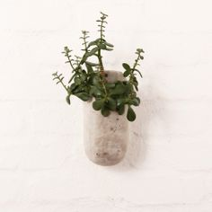 Pret-a-pot - Citymob Green Plants, Lovely Things, Flower Prints, Vases, Garden, Flowers, Handmade, House, Products