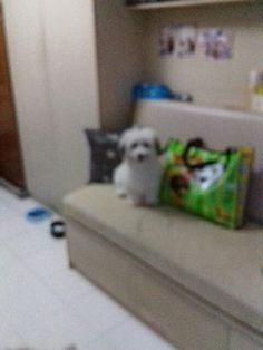 Candy my puppy
