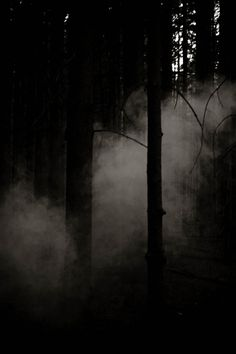 Dark Forest by ZacharySnellenberger