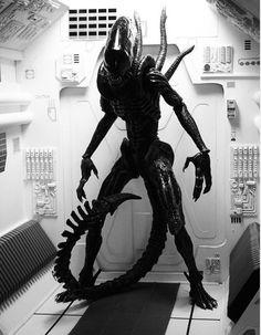 Alien 1/6th Model http://www.onesixthwarriors.com/forum/sixth-scale-action-figure-news-reviews-discussion/109117-1-6-alien-nostromo-corridor-dio.html