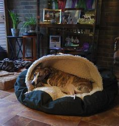 the Cozy Cave...if you have Whippets, Greyhounds, Italian Greyhounds or other dogs that get cold these are wonderful...