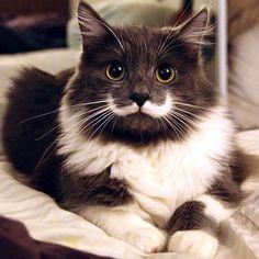 HAMILTON, IL GATTO HIPSTER - Non pensate che sia frutto di Photohop. Quei baffi sono veri!