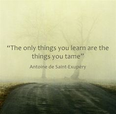 """""""The only things you learn are the things you tame"""""""