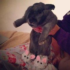 This bunny sporting ACTUAL BUNNY SLIPPERS.
