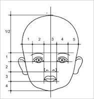 Image result for baby proportionen