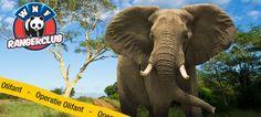 EduTip: Het WNF Lespakket Operatie Olifant is nu digitaal beschikbaar:  http://www.schoolbordportaal.nl/wnf-rangeractie-lespakket-olifant.html #onderwijs #digibord