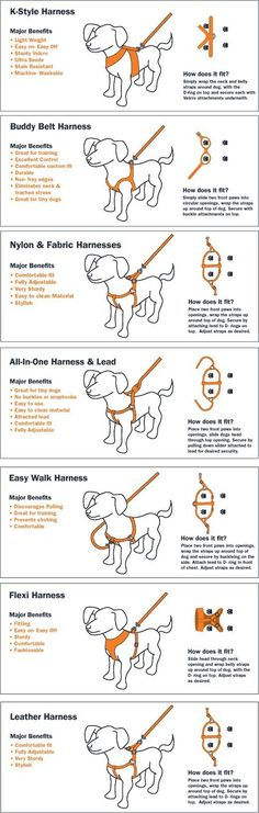 Why Use a Dog Harness