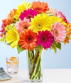 gerbera daisies - Google Search