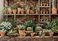 Espécies ricas em reserva de água, cactos, suculentas e agaves sobrevivem em qualquer canto desde que haja bastante sol e não exista umidade