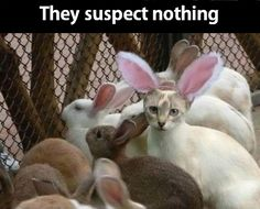 THEY SUSPECT NOTHING #cats