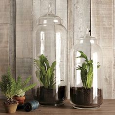 DIY glass jar terrariums. Perfect for gardening in small spaces. Also nice if you have animals (AKA: Cats) that like to eat your houseplats!