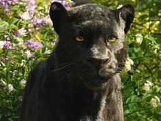 """I got: Bagheera! Which Character From """"The Jungle Book"""" Is Your Spirit Animal?"""