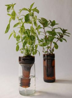 DIY self-watering planters using recycled glass bottles. Great little herb garden. I would love to make these using colored wine bottles. Wine Bottle Planter, Bottle Garden, Diy Bottle, Herb Garden Planter, Vegetable Garden, Gardening For Beginners, Gardening Tips, Organic Gardening, Plants In Bottles
