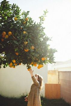Reaching for the oranges. Adorable little girl photo.
