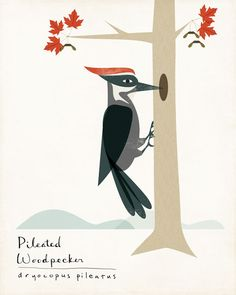 Pileated Woodpecker Limited Edition Print by ShopAmySullivan