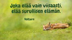 Fox, Motivation, Words, Type 3, Animals, Facebook, Beautiful, Photos, Animales