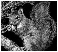 Scratchboard Squirrel - ~Kittykicker on deviantART Woodcut Art, Linocut Prints, Kratz Kunst, Animal Drawings, Art Drawings, Black Paper Drawing, Scratchboard Art, Scratch Art, Wood Engraving