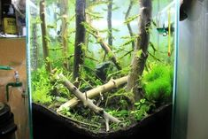 This guy took some tree branches and made one of the coolest fish tank environments I've ever seen! Cool Fish Tanks, Forest Habitat, Tree Branches, Habitats, Aquarium, Environment, Leaves, Amazing, Nature