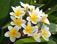 Flores para todas las mujeres porque son hermosas, especiales y únicas.                     10993087_896527103701502_432518431709661336_n.jpg (720×560)